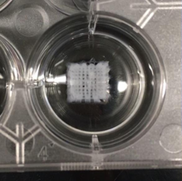 Engineering 3D bio-printed scaffolds Image