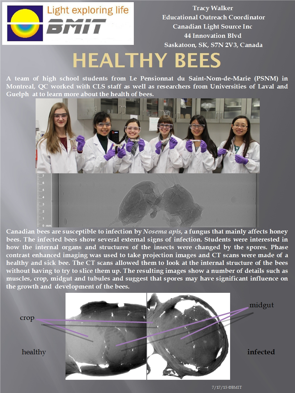 Healthy Bees Image
